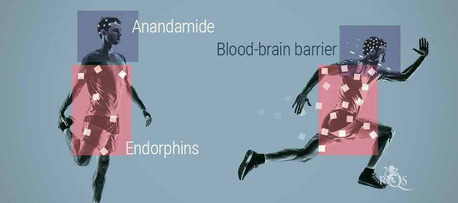 The Relationship Between Anandamide And Endorphins