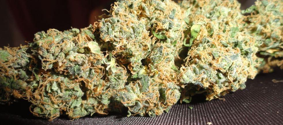Jack Herer Cannabis