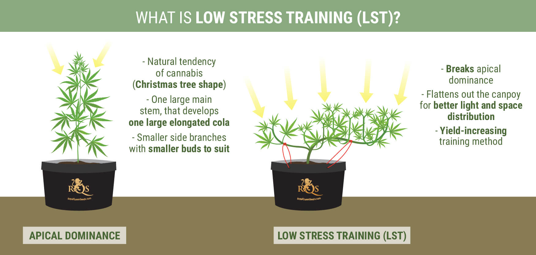 What is Low Stress Training?
