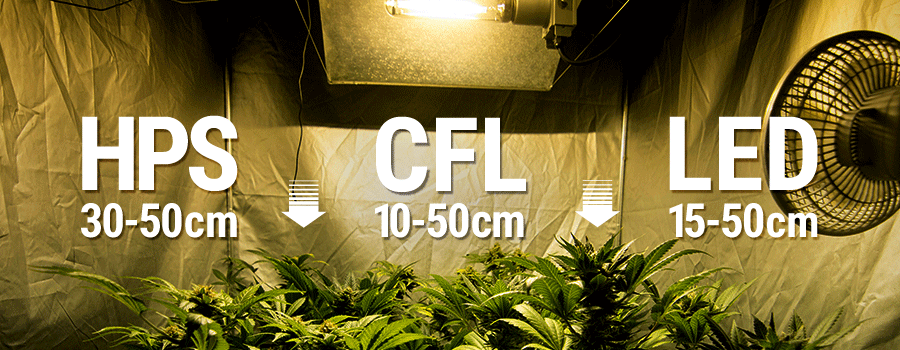 Lights Distance Indoor Cannabis Growroom
