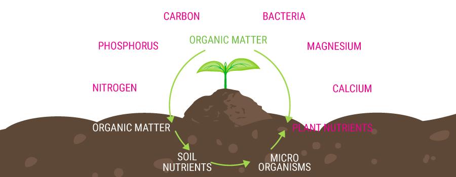organic feeding chain