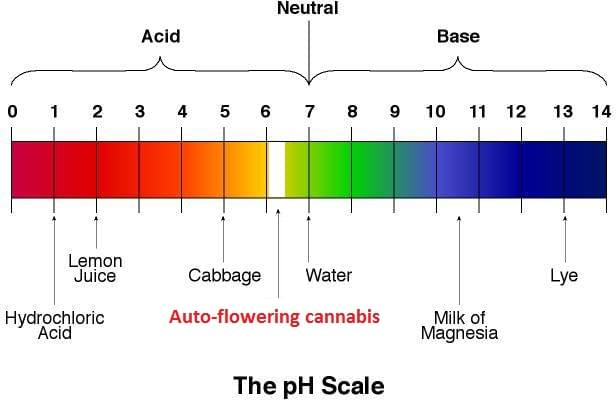 the perfect ph value for a cannabis plant. Black Bedroom Furniture Sets. Home Design Ideas