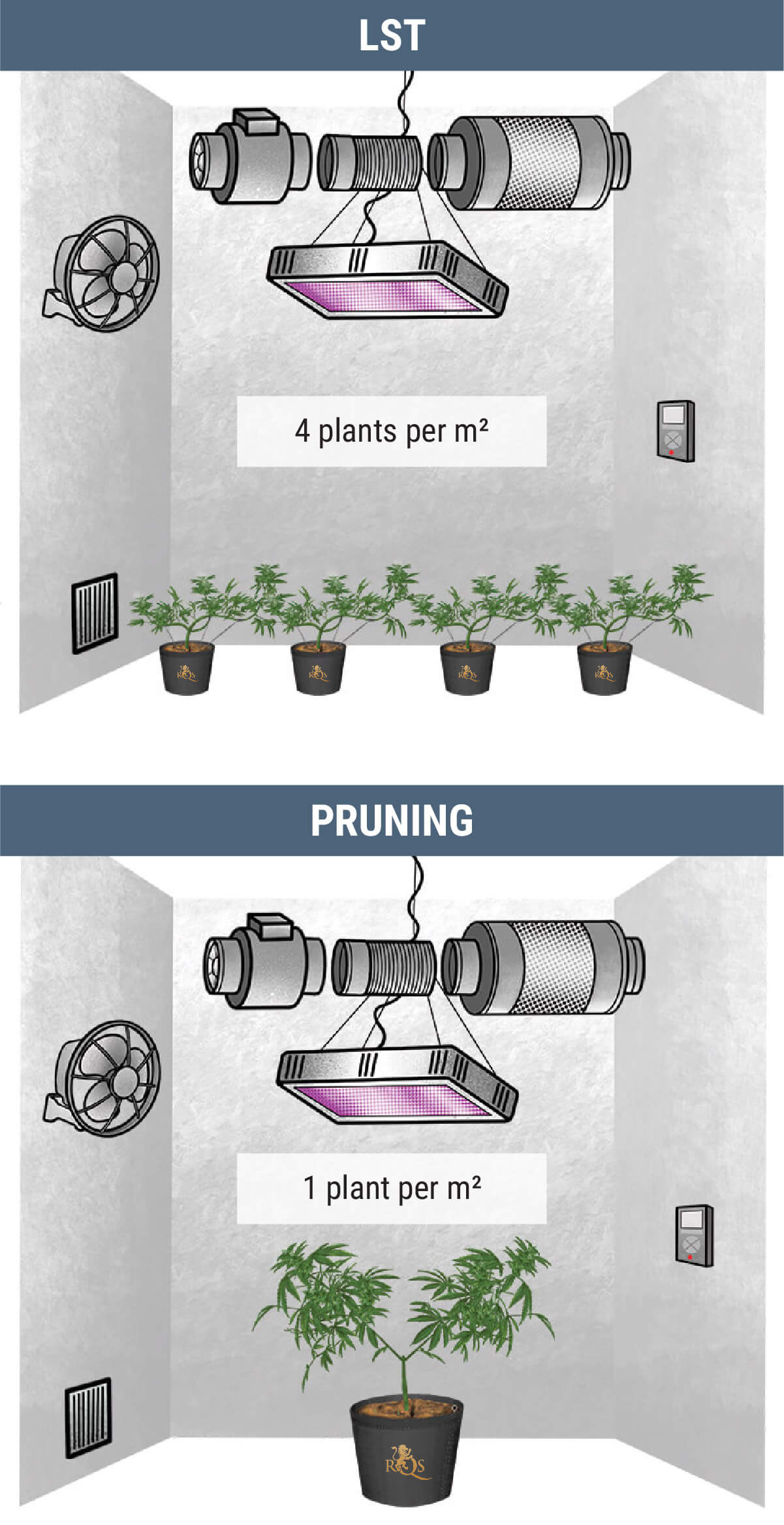 How Many Cannabis Plants Can You Grow Per Square Metre?