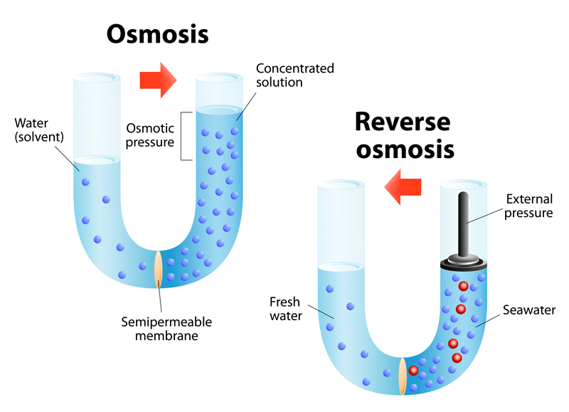 Osmosis water reverse osmosis growing cannabis plant