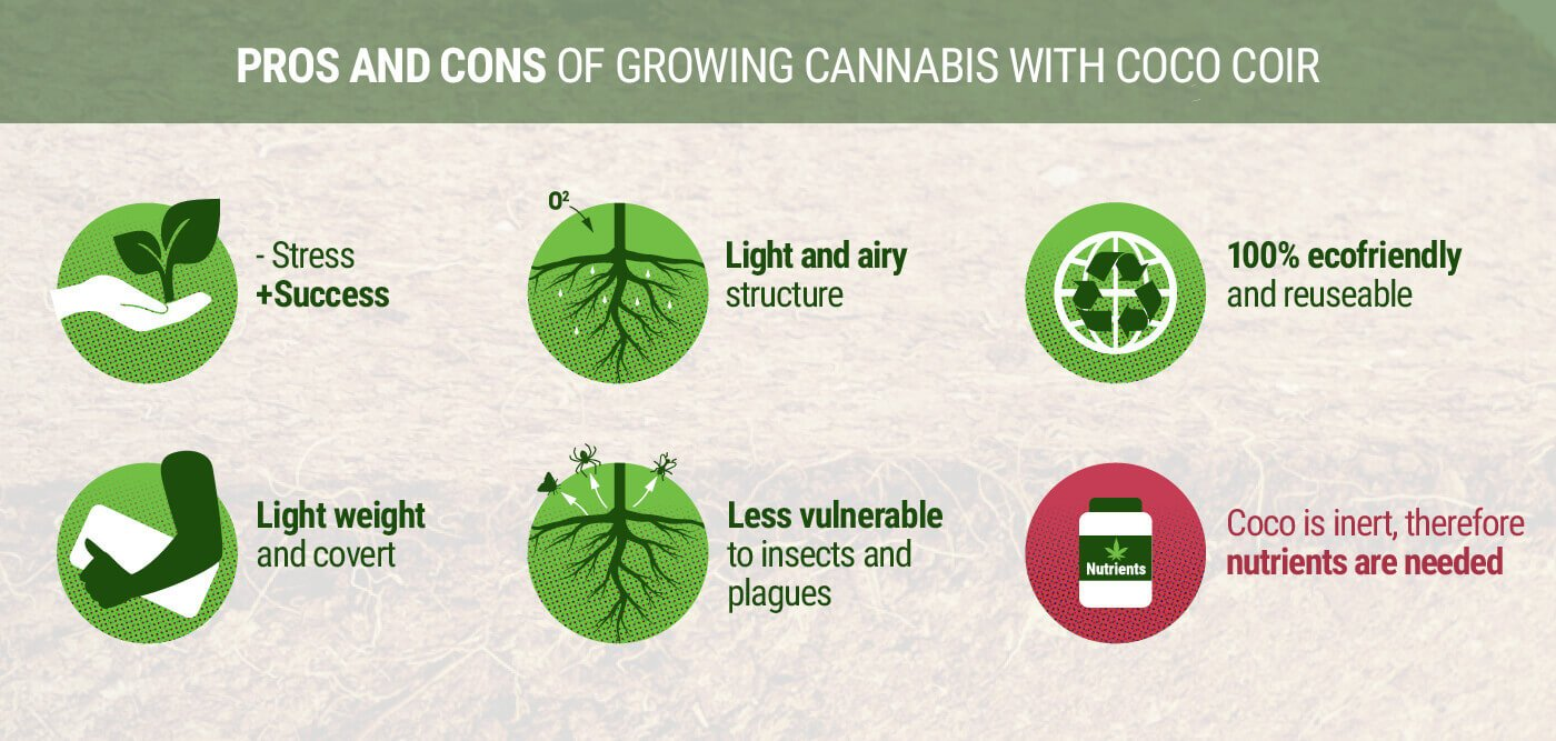 Pros and Cons of Growing Cannabis With Coco Coir