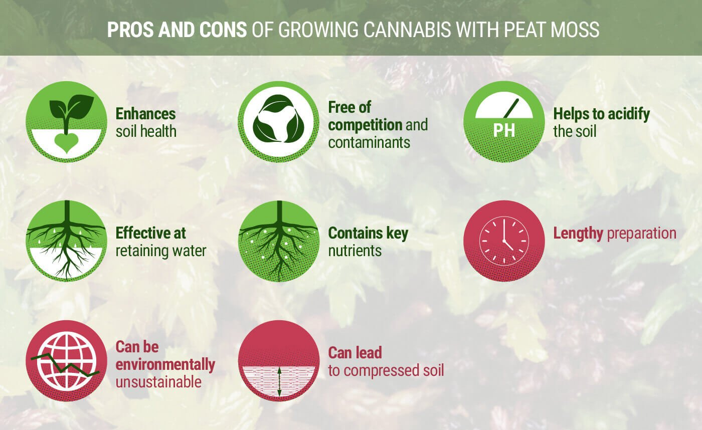 Pros and Cons of Growing Cannabis With Peat Moss