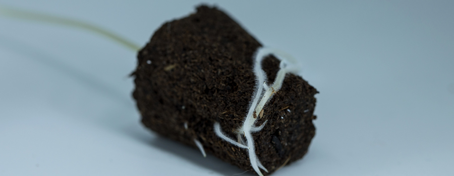 Roots Nutrients Breathe Cannabis plant