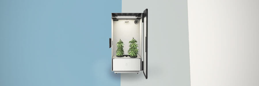 """the Leaf"" Growbox"
