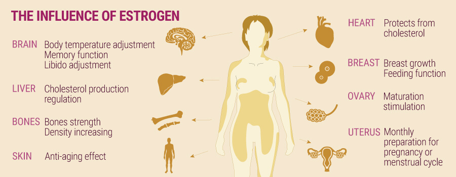 The Influence Of Estrogen And Cannabis