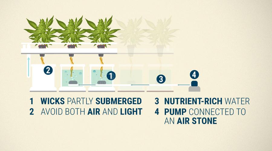 Hydroponics Cannabis Growing Guide - RQS Blog