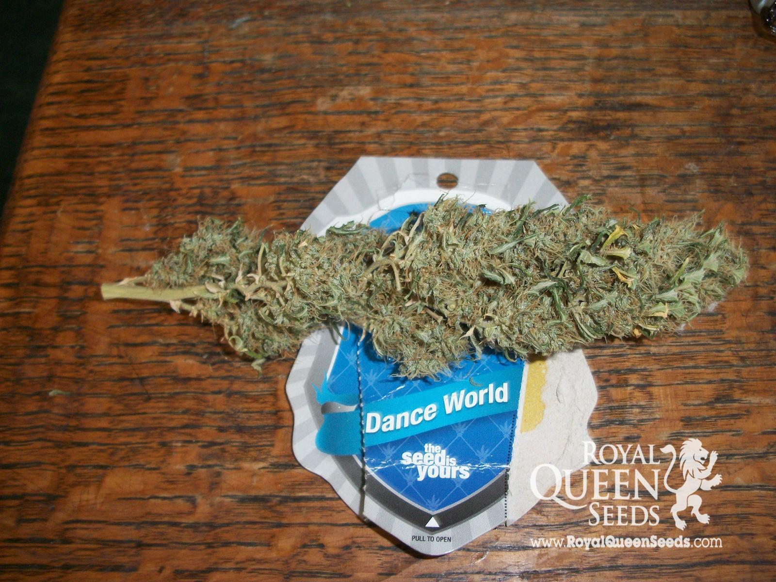 Dance World CBD Cannabis Seeds