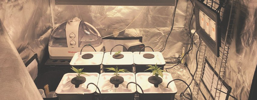 HOW TO SET UP AN AEROPONIC SYSTEM FOR GROWING CANNABIS