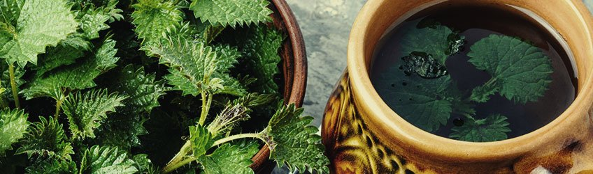 PESTS: NETTLE TEA BLEND
