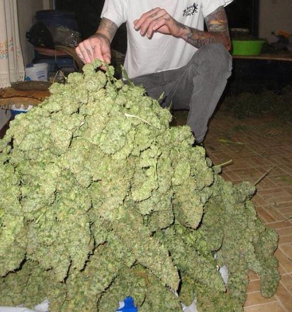 Guerrilla cannabis growing for dummies rqs blog for Planter du cannabis en exterieur