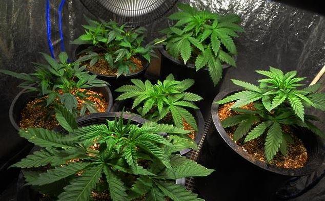 how to build a cannabis grow room