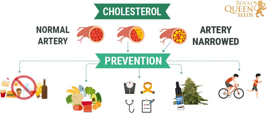 Cholesterol And Cannabis