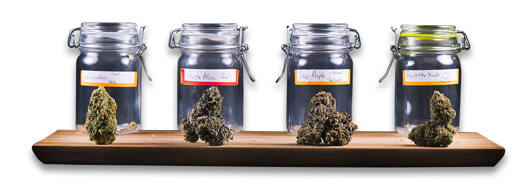 Curing Cannabis in a preserving jar