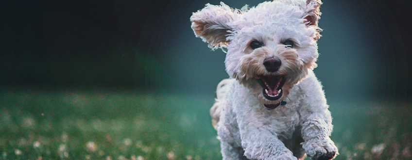 Cbd's Effects On Dogs