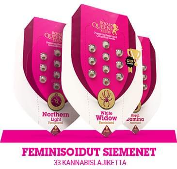 feminisoidut-kannabiksen-siemenet