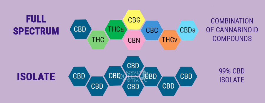 ARE CBD FULL SPECTRUM OIL THE SAME AS CBD ISOLATE?