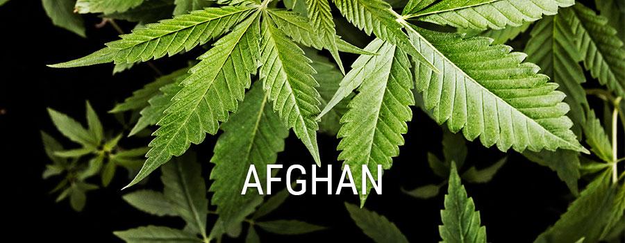 RQS Cannabis Genetics - Afghan - Royal Queen Seeds