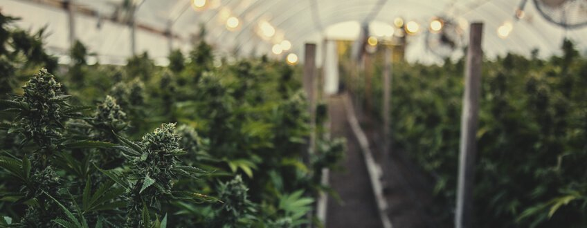 PROVIDES THE IDEAL MICROCLIMATE FOR GROWING CANNABIS
