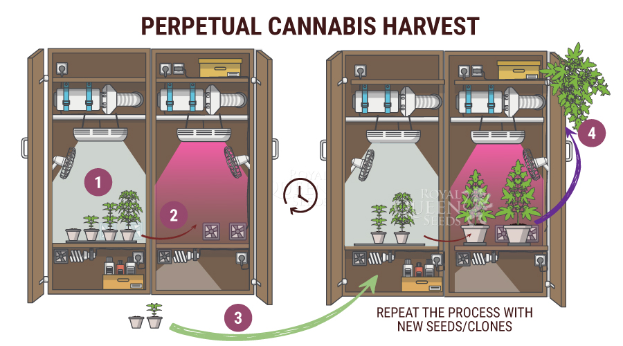 Perpetual Harvest Method