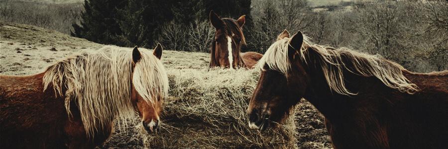 Horse organic compost