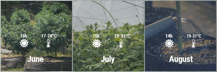 GROWING CANNABIS IN ITALY