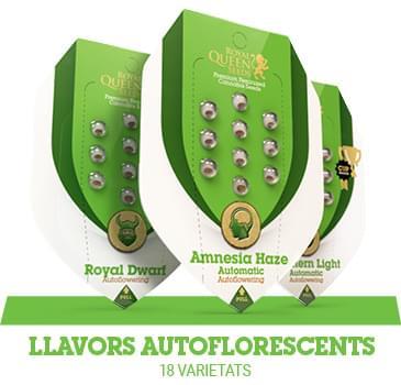 llavors-autoflorescents-cannabis