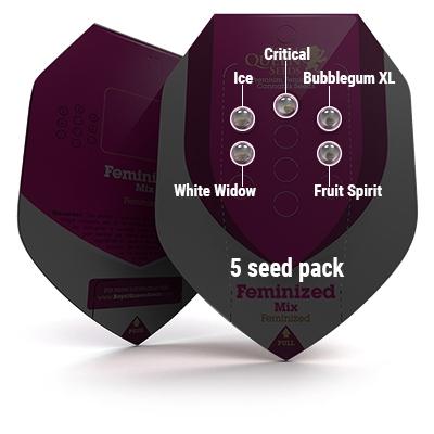 5 Seed RQS Feminized Mix