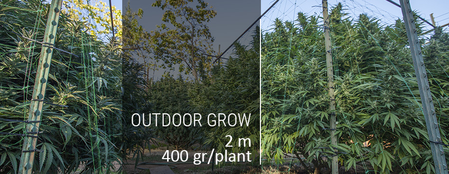 Outdoor Grow