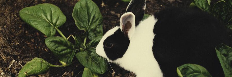 Rabbit organic compost