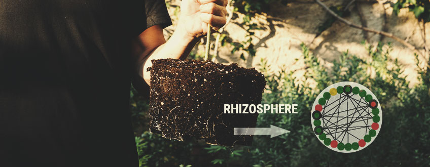 IMPORTANCE OF THE RHIZOSPHERE
