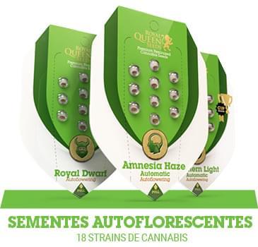 sementes-cannabis-autoflorescentes