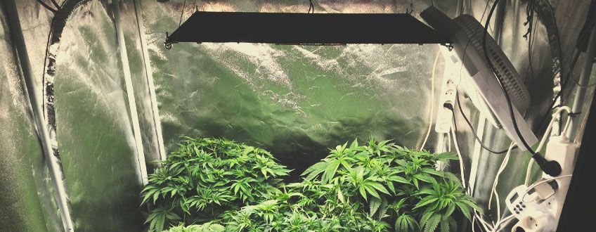 HOW TO PREPARE YOUR GROW SPACE