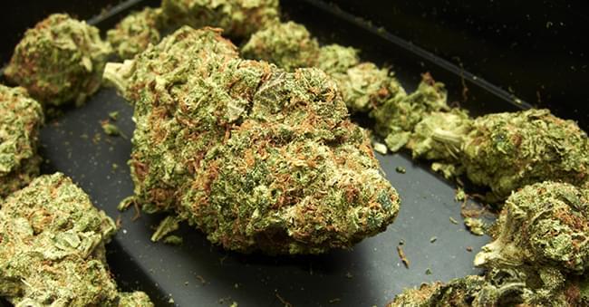 Cogollos Resina Densos Marihuana