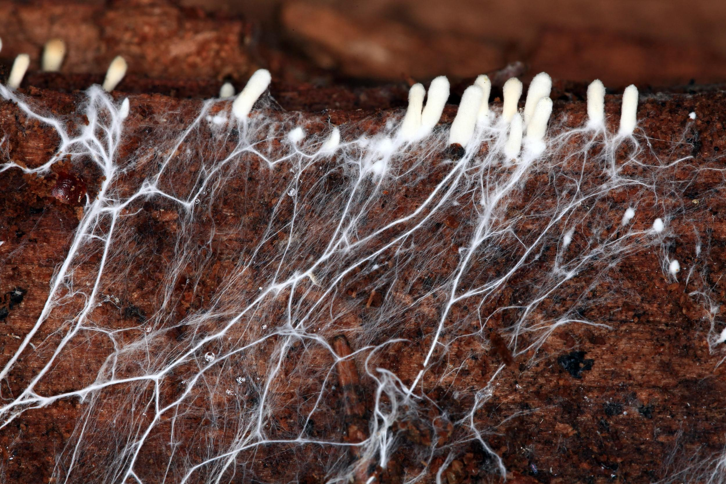 roots cannabis nutrients feed drainage oxygen plants