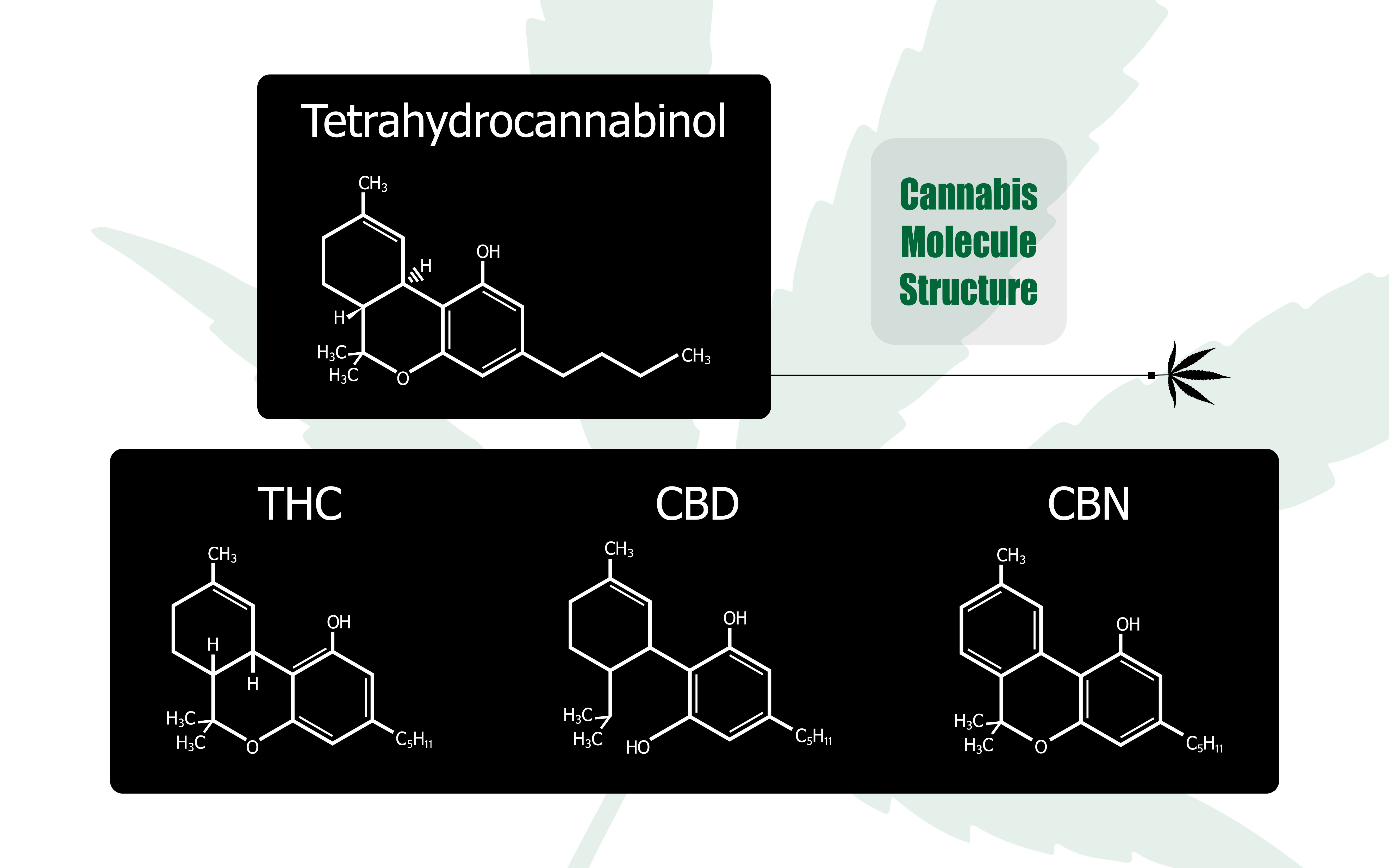 CBD THC entourage effect counteracts symbiosis immune system psyche cannabis medical marijuana cannabinoid endocannabinoid modulate