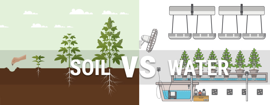 Does hydroponic or soil growing produce the best cannabis for Soil vs hydro
