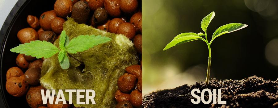 Soil vs Hydroponics