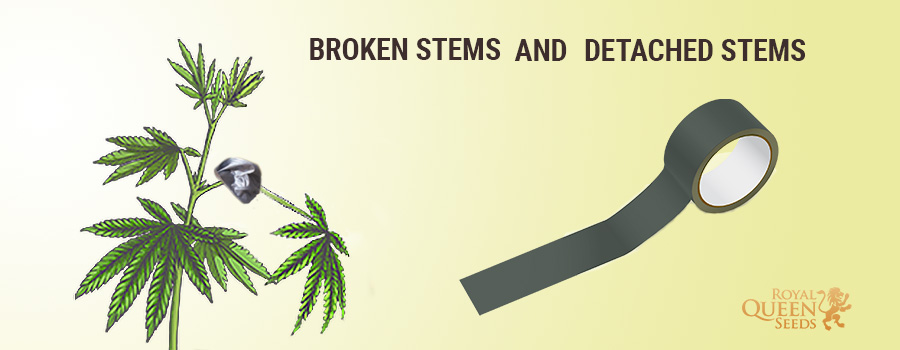 Fix Broken Stems And Detached Stems