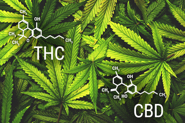 THC and CBD differences