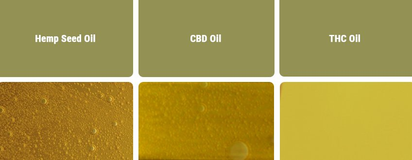 CBD Oil vs Other Types of Oils