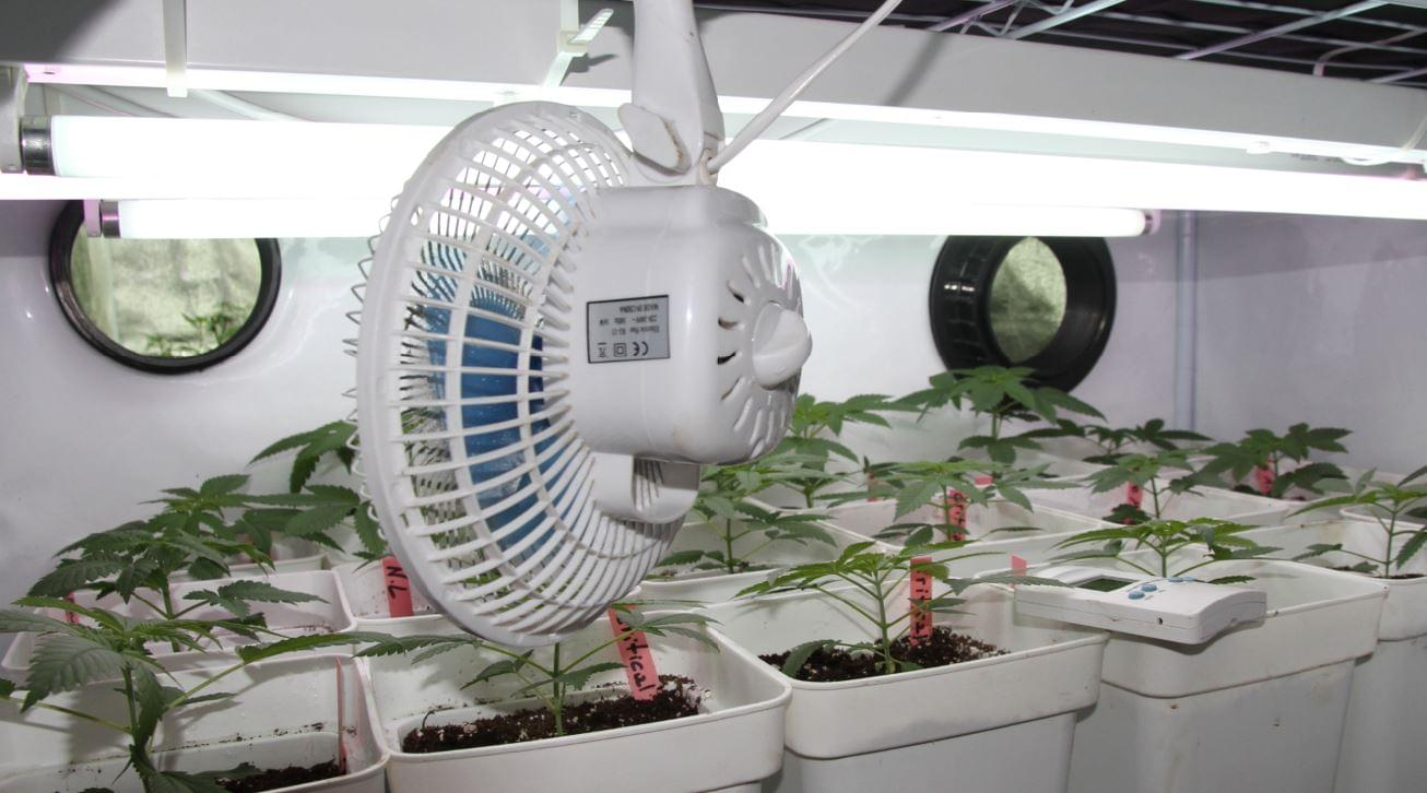 fan for growing cannabis