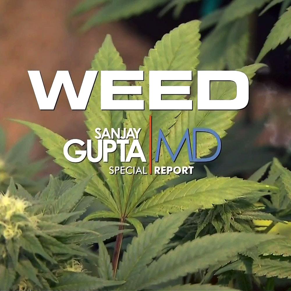 weed documentary modern