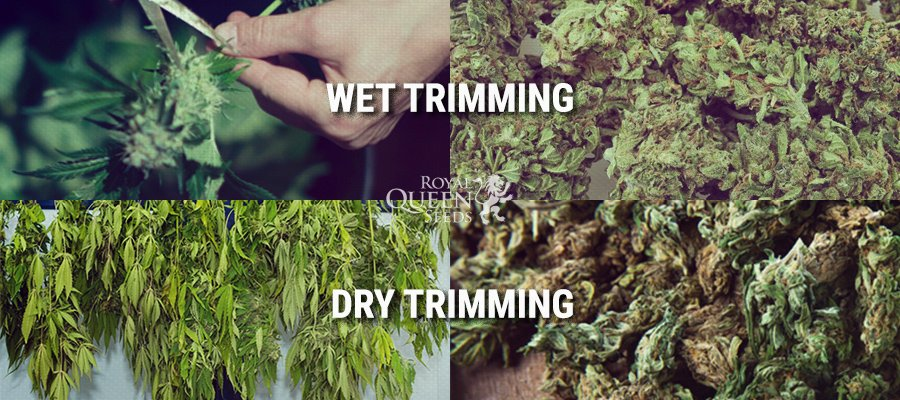 Wet Dry Trimming