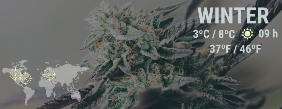 Cannabis Monthly Grow Guide: Northern Europe, USA & Canada