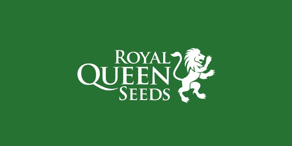 Autoflowering marijuana seeds - Royal Queen Seeds