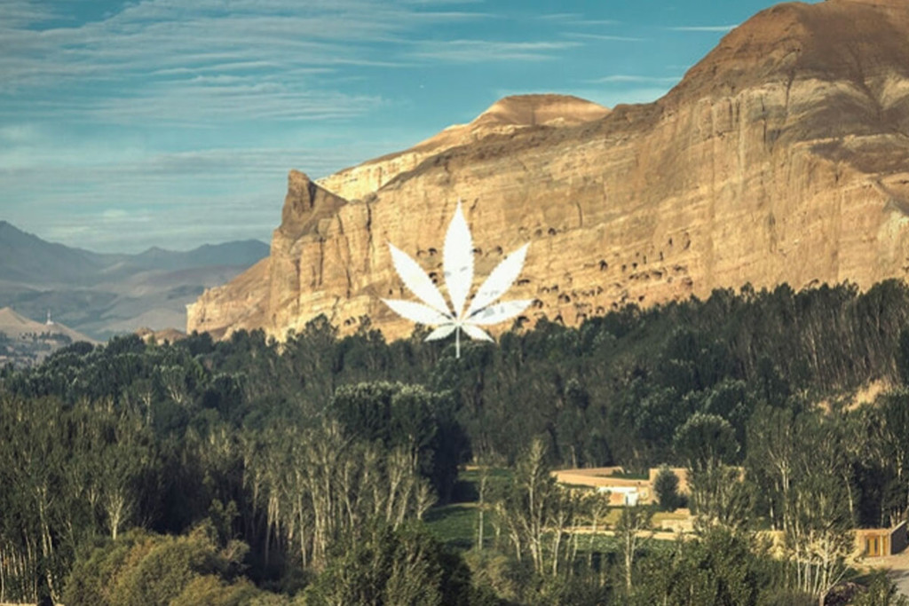 Origins And Legacy Of Hindu Kush Cannabis